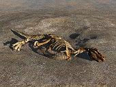 Illustration of a dinosaur skeleton