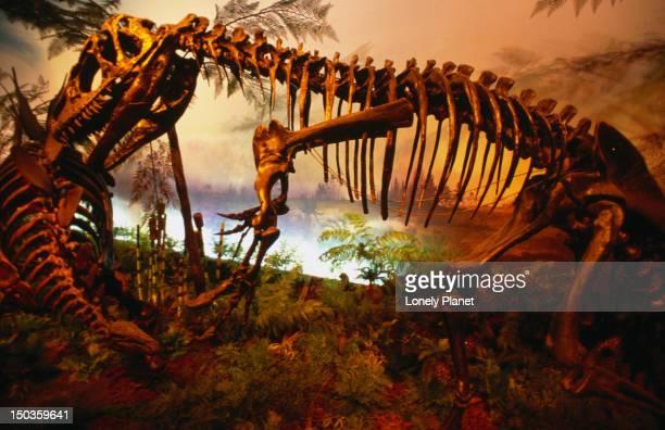 Dinosaur skeletons in the Royal Ontario Museum