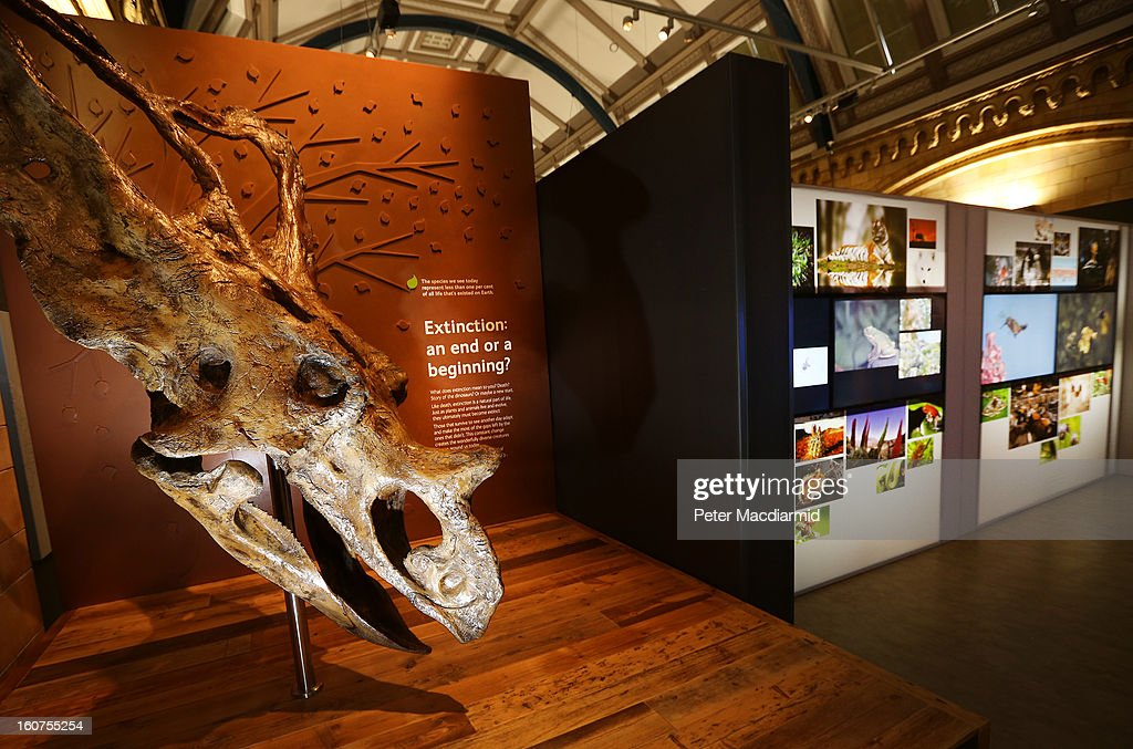 A dinosaur skull greets visitors to the Extinction: Not the End of the World? exhibition at The Natural History Museum on February 5, 2013 in London, England. More than 99 percent of species that once roamed the planet are now extinct. Organisers of the exhibition hope to show that a diverse range of plants and animals survived. 80 Museum specimens are on display from February 8-8, September 2013.