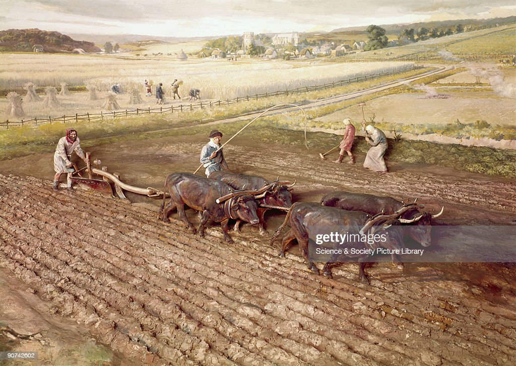 Diorama The plough was extremely difficult to force through the soil and as many as eight oxen might be used in heavy conditions The scene shows the...