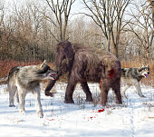An illustration of Dire Wolves attacking a young Woolly Mammoth. The dire wolf is an extinct carnivorous mammal of the genus Canis, roughly the size of the extant gray wolf, but with a heavier build.