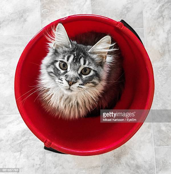 Directly Above Portrait Shot Of Cat In Bucket