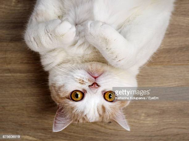 Directly Above Portrait Shot Of Cat Lying On Floor