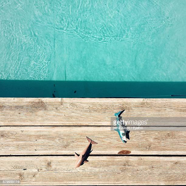 Directly Above Shot Of Artificial Fish By Swimming Pool