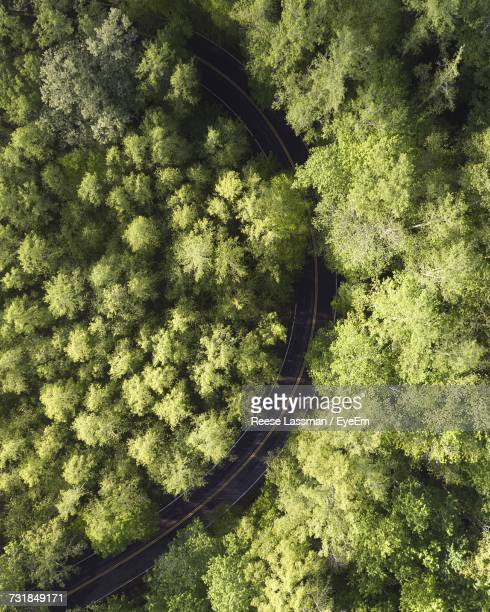 Directly Above Shot Of Curvy Road Amidst Trees