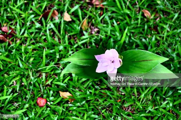 Directly Above Shot Of Flower Growing On Field