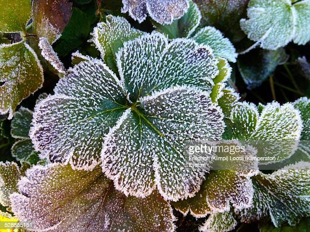 Directly Above Shot Of Frozen Plant