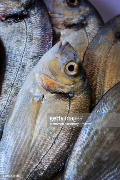 Directly Above Shot Of Gilthead Bream Fishes For Sale At Market