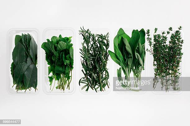 Directly above shot of herbs in containers on white background