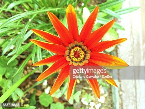 Directly Above Shot Of Orange Flower Blooming Outdoors
