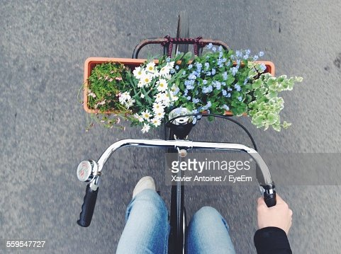 Directly Above Shot Of Plants On Bicycle Basket