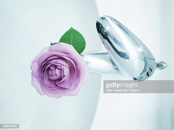 Directly Above Shot Of Purple Rose On Faucet