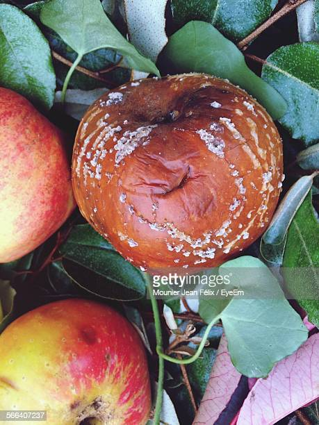 Directly Above Shot Of Rotten Apples On Field