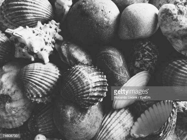 Directly Above Shot Of Seashells And Stones At Beach
