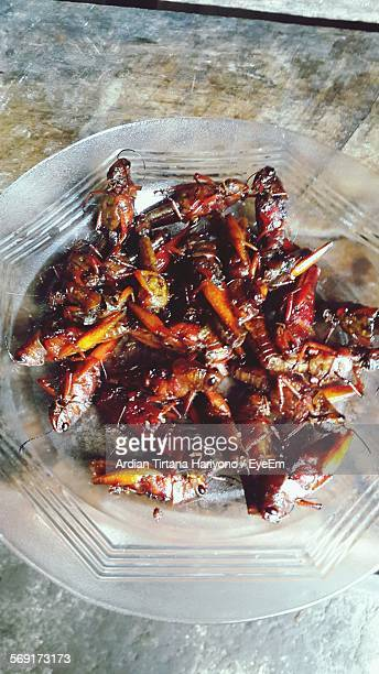 Directly Above Shot Of Served Fried Cockroach In Plate