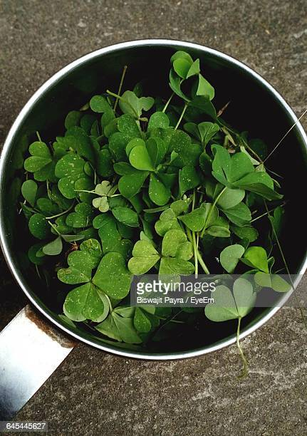 Directly Above View Of Clover Leaves In Mug