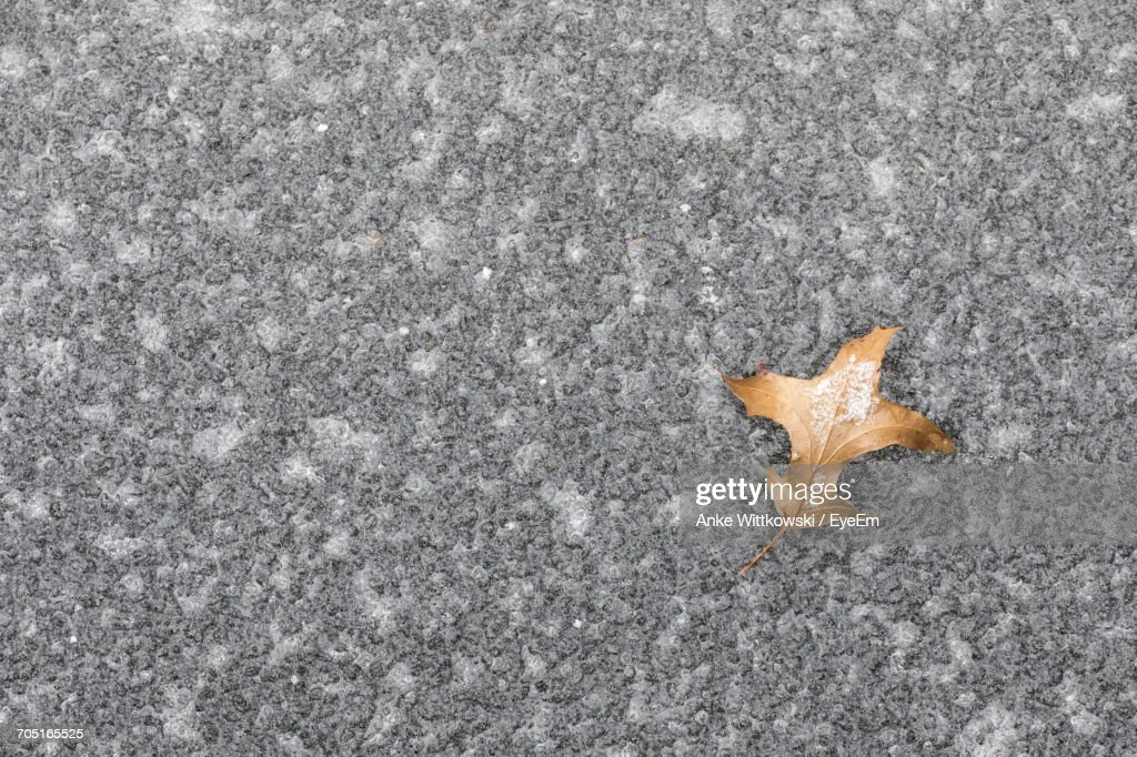Directly Above View Of Fallen Dry Leaf On Frozen Pond : Stock Photo