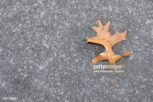 Directly Above View Of Fallen Dry Leaf On Frozen Pond
