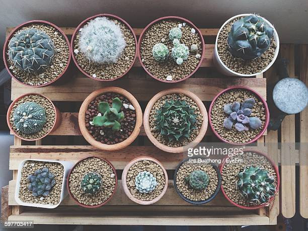 Directly Above View Of Fresh Succulent Plants In Pot On Wooden Crate