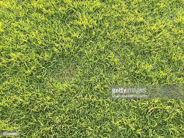 Directly Above View Of Grass