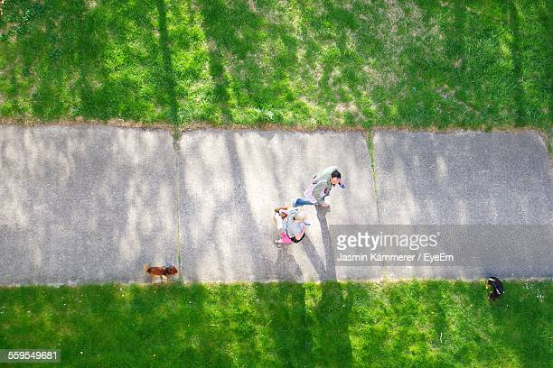 Directly Above View Of People Walking On Pathway With Dogs In Park