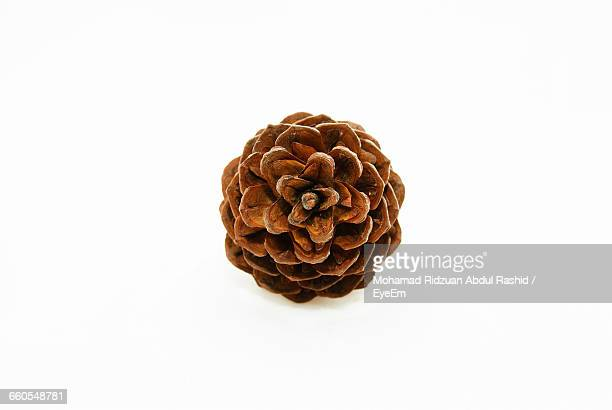 Directly Above View Of Pine Cone Against White Background