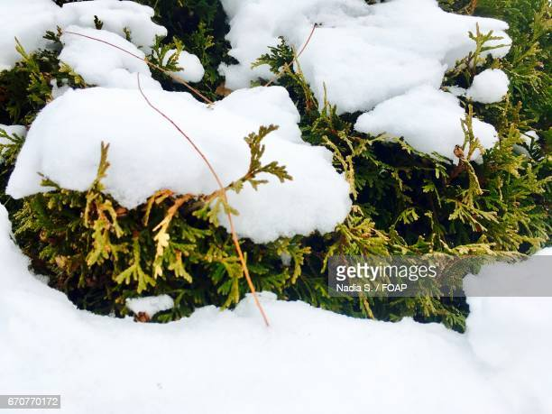 Directly above view of snow on plants
