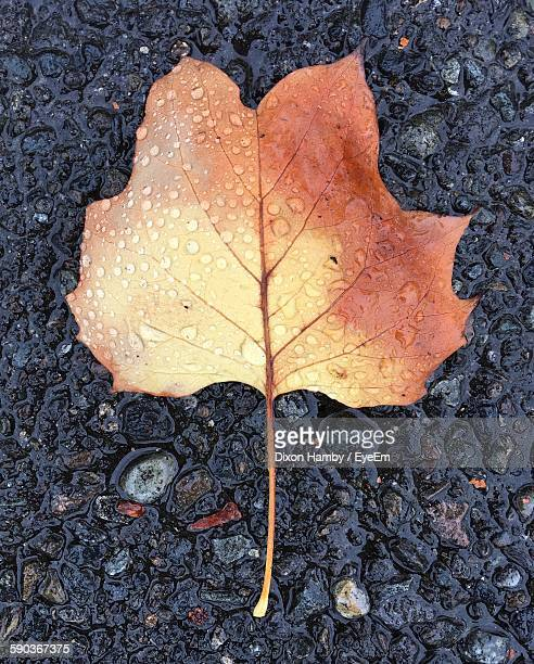 Directly Above View Of Wet Dry Leaf On Rock