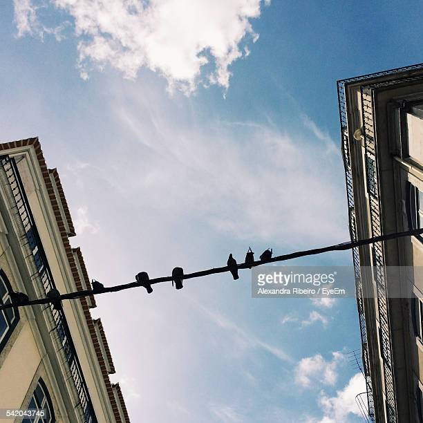 Directly Below Shot Of Birds On Rope Amidst Buildings In City