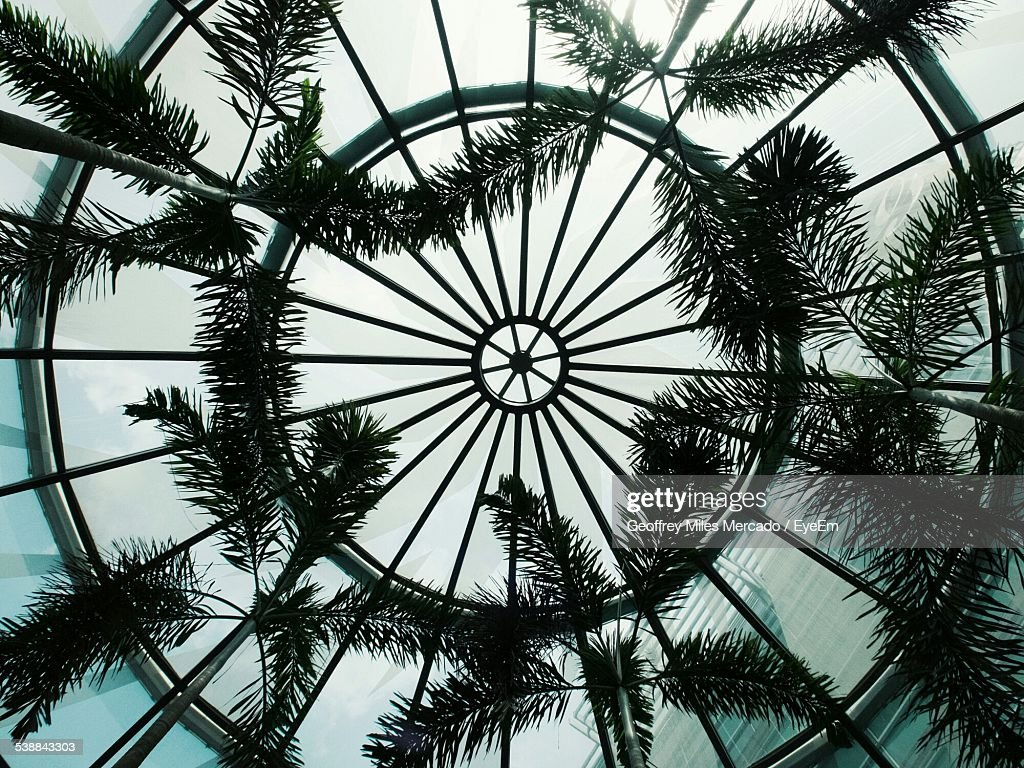 Directly Below Shot Of Glass Cupola With Trees Against Sky