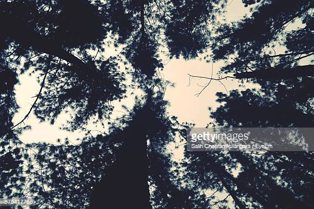 Directly Below Shot Of Silhouette Trees Against Sky