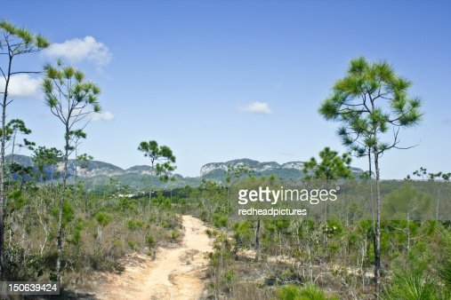 Dirt path in forest : Stock Photo