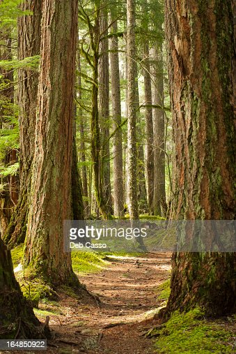 汚れパスの森 : ストックフォト