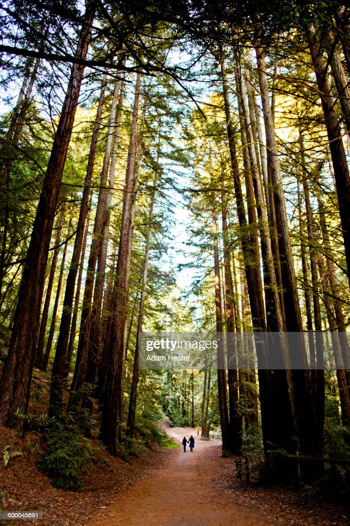 Dirt path through trees in forest