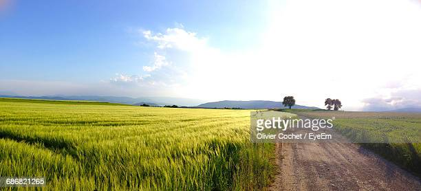 Dirt Road Along Countryside Landscape