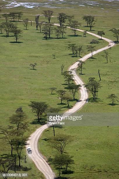 Dirt road and acacia trees, aerial view