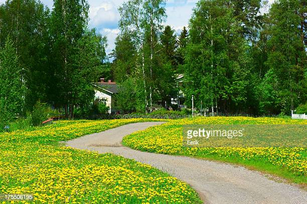 Dirt road and dandelions