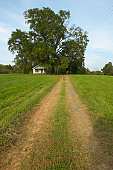 Dirt Road and tire tracks leading to country home