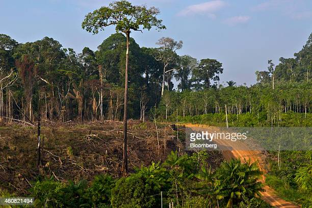 A dirt road cuts through a section of rain forest in the southern part of the Amazonian state of Para near Anapu Brazil on Tuesday Dec 16 2014 The...