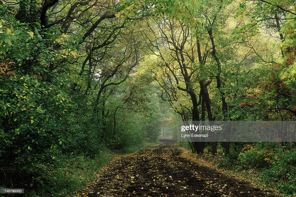 Dirt road in autum, Rockville Center, NY : Stock Photo