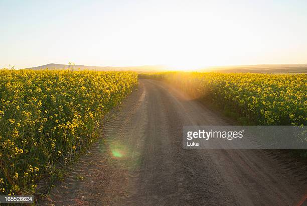 Dirt road in field of flowers