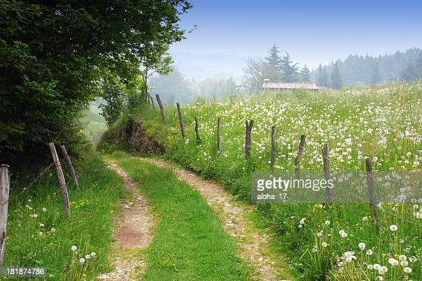 Dirt road in primavera, paesaggio rurale