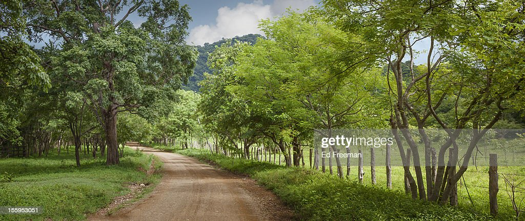 Dirt Road in the Countryside : Stock Photo