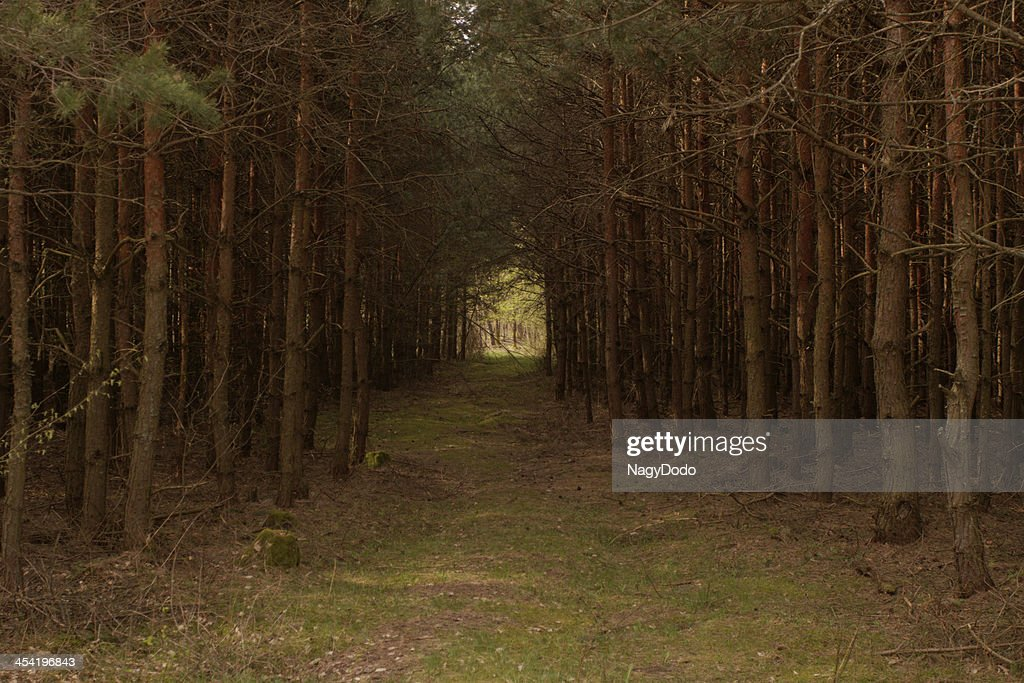 dirt road in the forest : Stock Photo