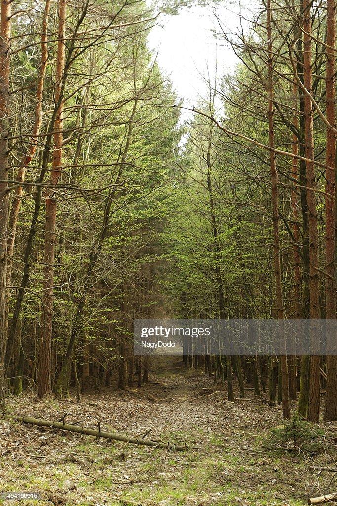 Estrada em Terra Batida na floresta : Foto de stock