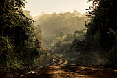 Dirt road in the tropical jungle, with morning mist