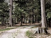 Dirt Road in Woods in Pennsylvania.  Stump in forground.