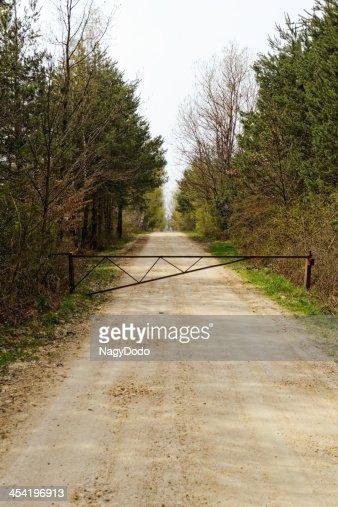 Carretera de tierra del bosque : Foto de stock