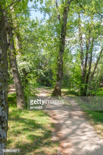 dirt road through a forest : Stock Photo