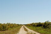 Dirt road through field with young trees
